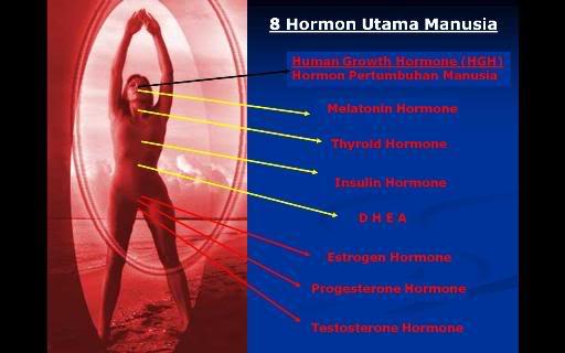 58HormonUtamaManusia